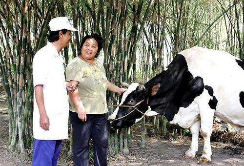 Vinamilk có nhiều chính sách ưu đãi trong thu mua sữa tươi nguyên liệu tại các hộ chăn nuôi