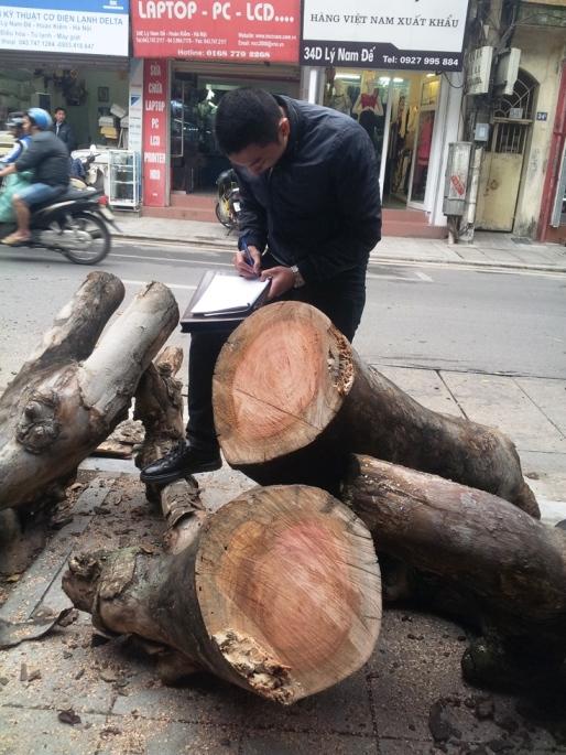 Hà Nội: Kiến nghị nhiều lần mới chặt cây sâu mục