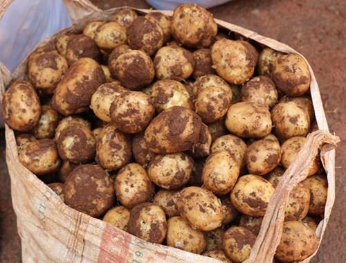 Khoai tây Trung Quốc tràn ngập chợ Nông sản Đà Lạt 10