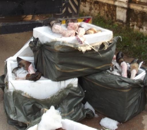Các thùng xốp đựng chân trâu, bò bốc mùi bị lực chức năng thu giữ. Ảnh: Nguyễn Dũng.