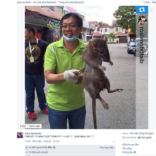 Chuột to bằng mèo gây bão mạng xã hội Singapore
