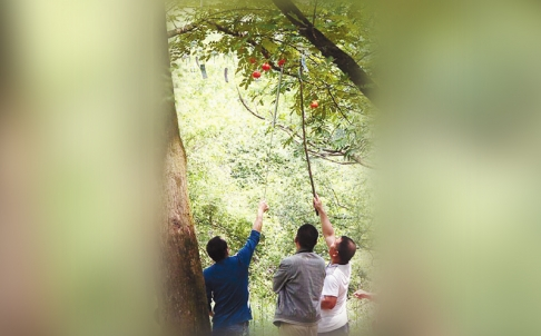 Du khách lấy trộm chuông gió. Ảnh: Qianjiang Evening News