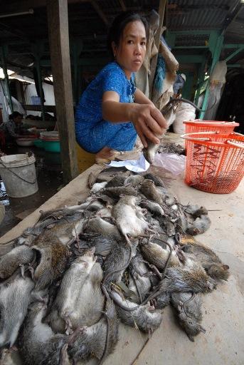 Còn cách bắt chuột dùng chỉa đâm hay đổ nước vào hang thường làm chuột chết bán sẽ mất giá hơn so với chuột sống.