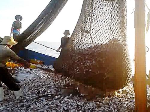 """Tàu giã cào """"quét"""" tất cả sinh vật dưới biểnẢnh: Trần Thường"""