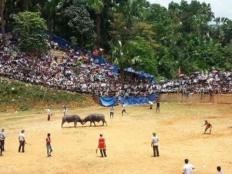 Lễ hội chọi trâu ở xã Bằng Hành, huyện Bắc Quang, tỉnh Hà GiangẢnh: TRƯỜNG GIANG