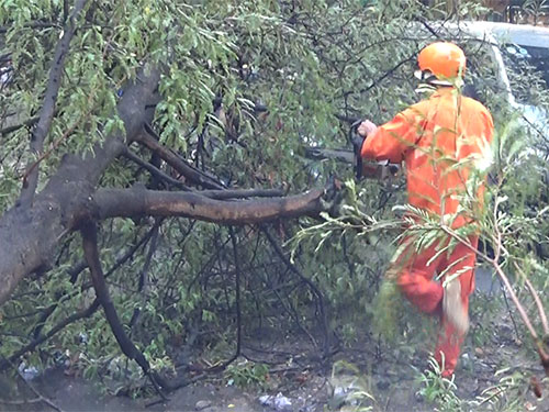 Hiện trường cây me ngã xuống đường Dân Chủ, quận Thủ Đức, TP HCM