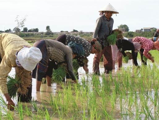 Nông dân Campuchia