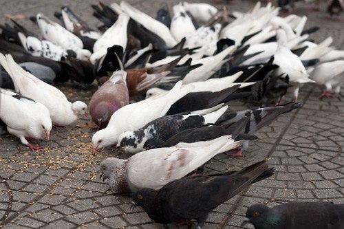 Người Sài Gòn luôn rộng lòng bao dung kể cá đối với chim huống chi người