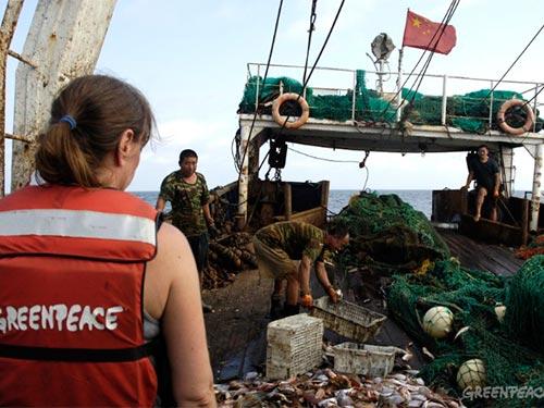Một tàu cá Trung Quốc bị phát hiện hoạt động trái phép trong vùng đặc quyền kinh tế của Guinea  Ảnh: GREENPEACE.ORG