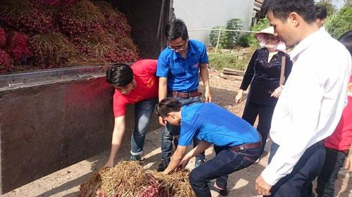 """Lực lượng đoàn viên, thanh niên tình nguyện của tỉnh Sóc Trăng tham gia """"giải cứu"""" hành tím"""