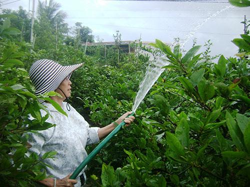 Trồng hoa - nghề phụ của nhiều giáo viên tỉnh Phú Yên để có tiền chi tiêu ngày Tết Ảnh: HỒNG ÁNH