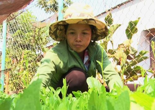 Chị Võ Thị Hà với công việc chăm sóc cây cao su giống hằng ngày