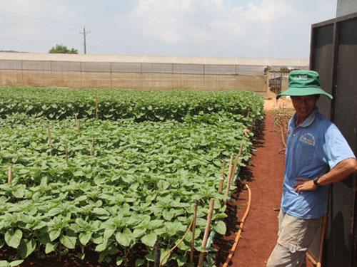 Do thu nhập cao nên nông dân chuyển hướng trồn hoa hướng dương
