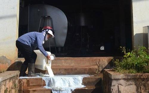 Người dân đổ sữa trước cửa trạm thu mua tại Đà Lạt mới đây - Ảnh: Thanh Niên.