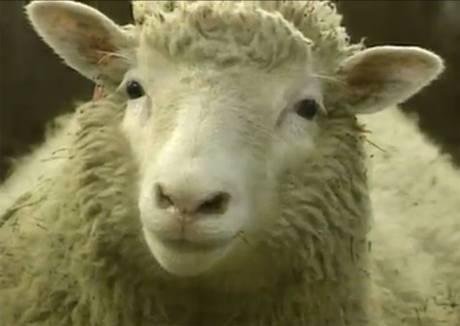 Cừu Dolly sẽ được vinh danh