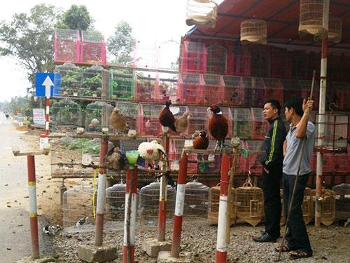 Chim trời được bày bán công khai trong vùng có dịch