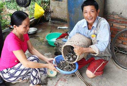 Cá còi được thương lái thu mua rồi xuất qua Trung Quốc