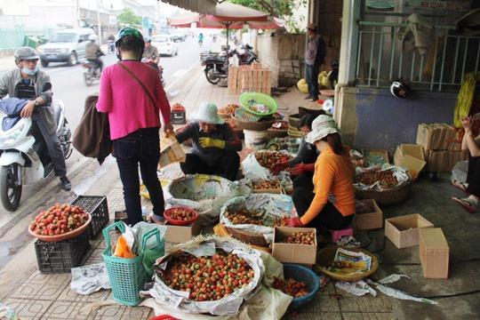 Dâu tây tại Đà Lạt đang khan hiếm