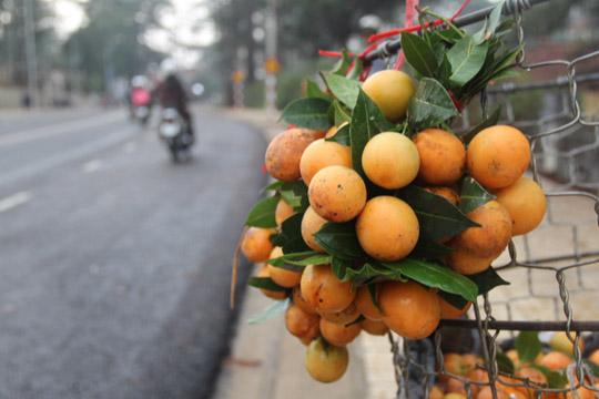 Những quả thanh trà treo lủng lẳng trên đường phố Đà Lạt