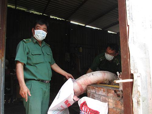 Heo bệnh được giết mổ để đem đi tiêu thụ bị Đoàn Kiểm tra liên ngành huyện Bình Chánh, TP HCM phát hiệnẢnh: NGỌC ÁNH
