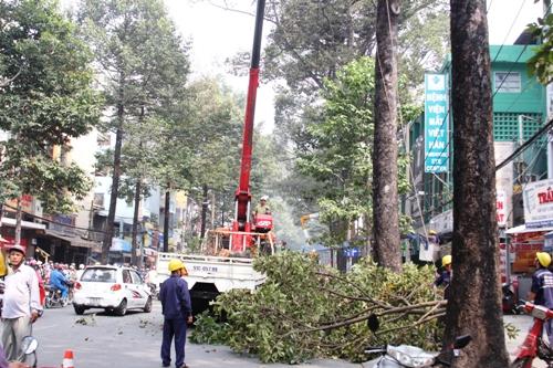 Hiện trường cây gãy trên đường Ngô Gia Tự, phường 3, quận 10, TP HCM