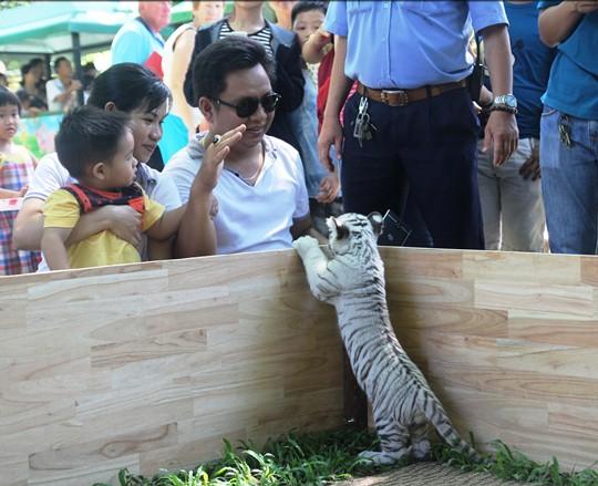 Khách đến Thảo Cầm Viên rất thích thú lên hình với chú hổ con quý hiếm