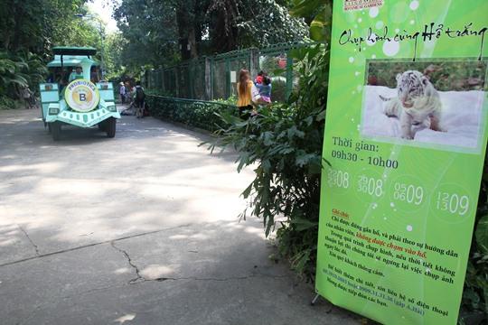 Thảo cầm viên Sài Gòn đã tiến hành tổ chức để người dân được chụp ảnh cùng 3 chú hổ trắng Bengal. Các khách đến tham quan đều rất thích thú lên hình với những chú hổ con đáng yêu