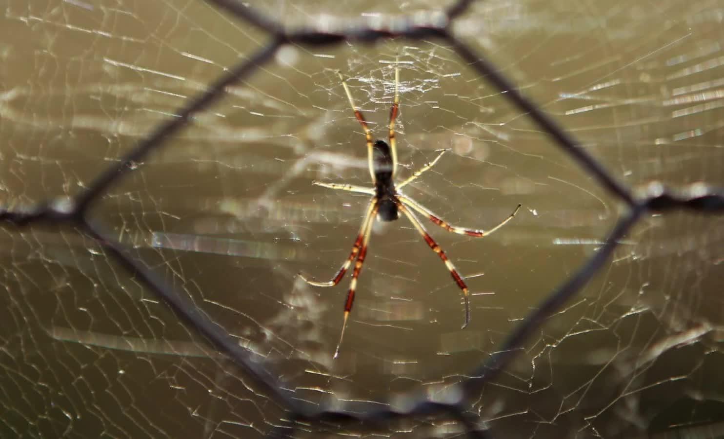 Mưa nhện xuất hiện ở