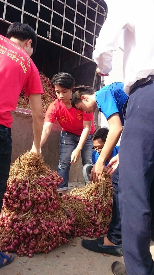 Trước khi được giải cứu, hành tím Vĩnh Châu chí có giá từ 2.000- 3.000 đồng/kg
