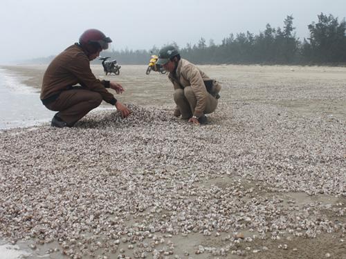 Người dân dọn dẹp số sò, ốc chết dạt vào bờ biển nhưng dọn ngày hôm nay thì ngày mai tình trạng này lại tái diễn