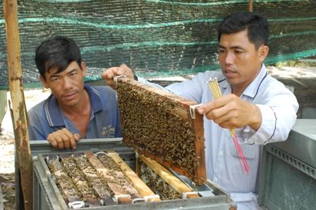 Phải thường xuyên kiểm tra theo dõi đàn ong