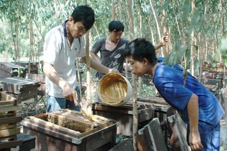 Anh Phạm Vũ Linh cho đàn ong ăn