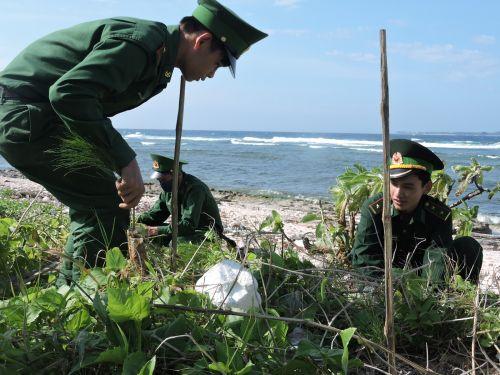 Người dân và chiến sĩ trên đảo Lý Sơn tham gia trồng cầy