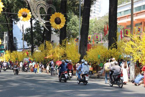 Khắp các tuyến phố tràn ngập hoa mai