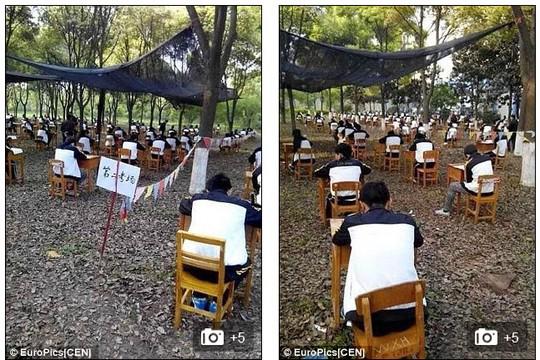 Học sinh làm bài trong rừng.