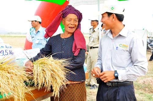 Nông dân Campuchia tham gia trồng lúa nguyên liệu với Tập đoàn Lộc Trời Ảnh: TẤN NINH