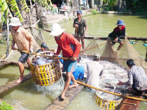 Số chất cấm trong thủy sản bị phát hiện đã giảm đáng kể. Ảnh: Thốt Nốt