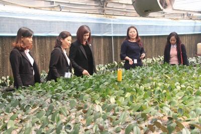 Với sự tiếp sức từ Agribank, HTX Đan Hoài, huyện Đan Phượng, TP Hà Nội ngày càng mở rộng sản xuất theo quy mô lớn và chuỗi liên kết