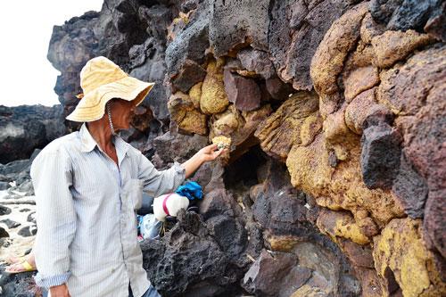 Các lớp đá vôi do hoạt động núi lửa hàng triệu năm tạo ra - một trong những di sản địa chất cực kỳ quý hiếm ở Lý Sơn - đang bị tàn phá không thương tiếc do các công trình xây dựng, khai thác cát quanh đảo