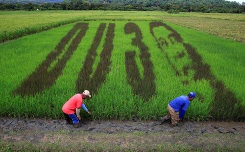 Công trình nghệ thuật về Tổng thống Rodrigo Duterte xuất hiện trên cánh đồng lúa ở TP Los Banos, tỉnh Laguna, Philippines Ảnh: REUTERS