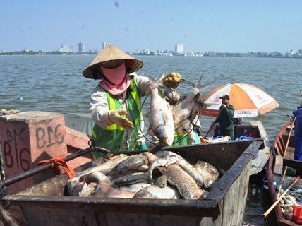 Vụ cá chết tại Hồ Tây khiến nhiều người dân Hà Nội hoang mang