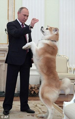 Ông Putin cho Yume ăn. Ảnh: AP