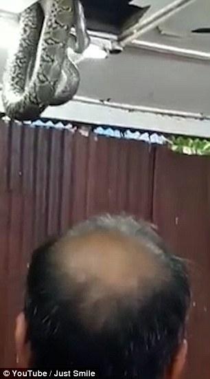 Con rắn treo lơ lửng trên trần nhà hàng. Ảnh: Youtube