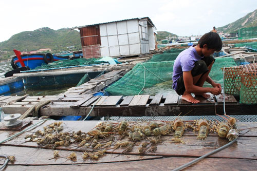 Thủy sản ở Khánh Hòa chết nhiều thời gian qua do ô nhiễm môi trường