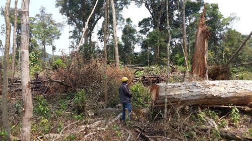 Người dân lấn chiếm đất rừng làm nương rẫy ở tỉnh Kon Tum