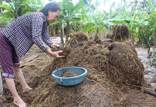 Bà Huỳnh Thị Bạch Tuyết, ngụ xã An Hiệp (huyện Tuy An, tỉnh Phú Yên) bên đống lúa mục nát sau lũ