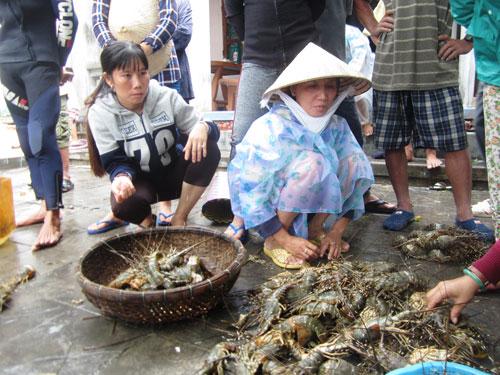 Lũ tràn về, cả ngàn lồng tôm hùm nuôi ở thị xã Sông Cầu, tỉnh Phú Yên chết trắng. Trong ảnh: Người dân thẫn thờ trước hàng đống tôm hùm sắp thu hoạch bị chết Ảnh: Hồng Ánh