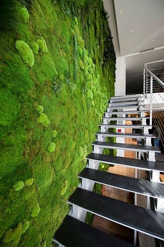 Bố trí tường màu xanh bên cạnh cầu thang cũng là ý tưởng hấp dẫn