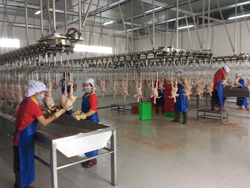 Nhà máy giết mổ gia cầm Ba Huân tại Long An