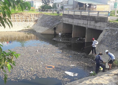 Lực lượng chức năng vớt xác cá trên kênh Đa Cô Ảnh: Tùng Quân